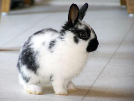 voglio un coniglio nano